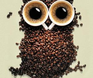 owl and coffee image