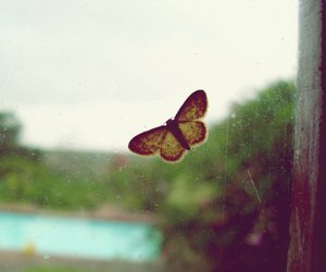 butterfly, moth, and window image