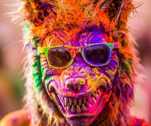 colors, wolf, and color image