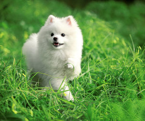 dog, fluffy, and grass image