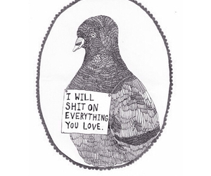 lovely, OMG, and pigeon image