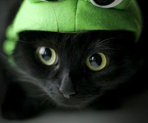 cat, frog, and black image