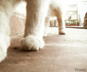 cat, photography, and fito image