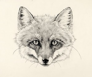 fox, drawing, and illustration image