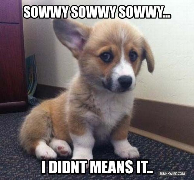 More cute and funny animals at www skunkwire com :D