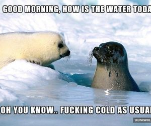 seal and cold image