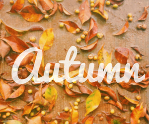 autumn, frases, and phrases image