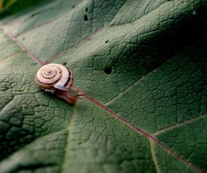 leaf, national geographic, and nature image