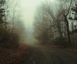 autumn, pretty, and fog image