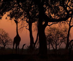 africa, national geographic, and wild image