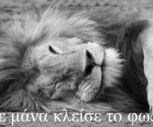 animals, greek quotes, and funny image