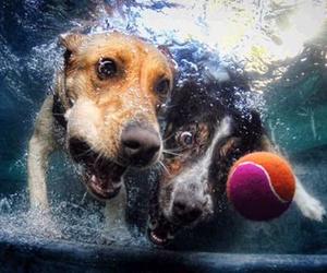 dog, ball, and water image