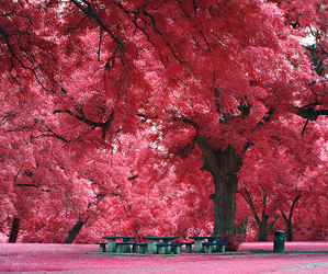 photgraphy, pretty, and trees image