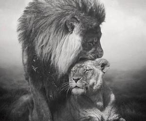 beautifull, king, and love image