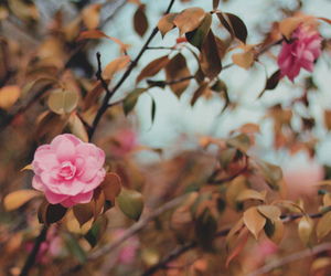 flowers, blossom, and rose image