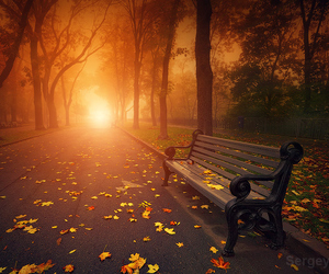 autumn, love, and leaves image