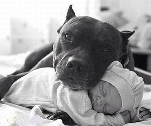 dog, baby, and pitbull image