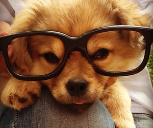 animal, dog, and snoopy image