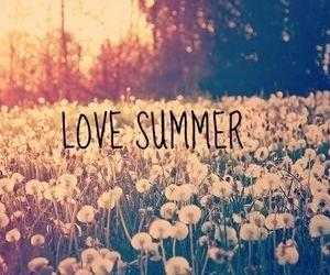 summer, love, and flowers image