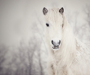 winter, horse, and animal image