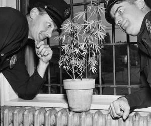 cops, police, and pot image