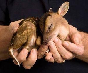 baby, deer, and cute image