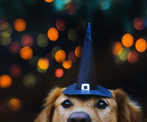 dog, Halloween, and lights image