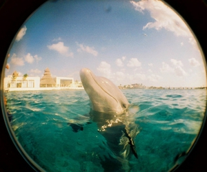 dolphin, photography, and sea image