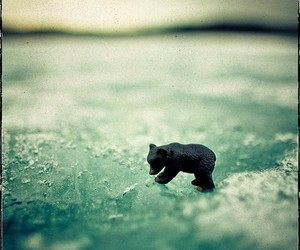 bear, ice, and photography image