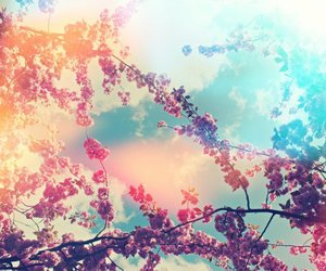 flowers, colors, and sky image