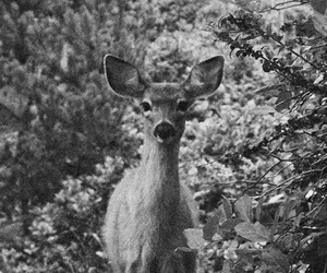 animals and black and white image