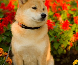 dog, flowers, and handsome image