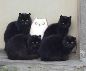 cat, animal, and black cat image