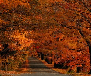 autumn, trees, and vermont image