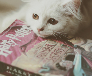 book, cat, and chamber of secrets image