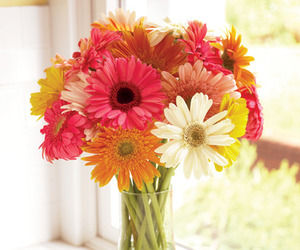 flowers, daisy, and colors image