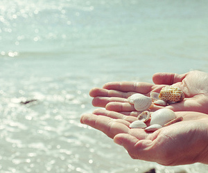 shell, hands, and summer image