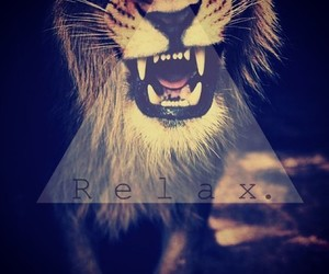 relax, lion, and animal image