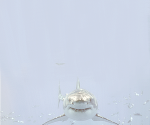 shark, water, and fish image