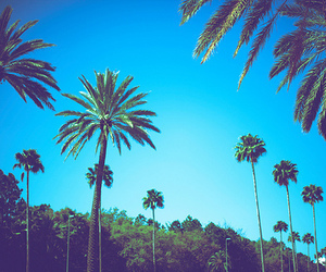 palmes image