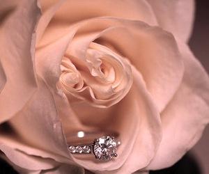 amazing, flower, and rose image