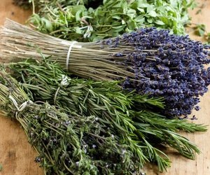 lavender and witch image