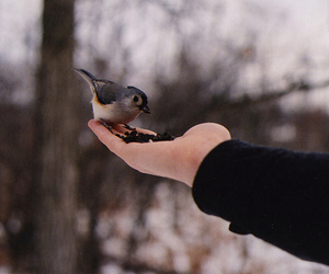 bird, hand, and winter image