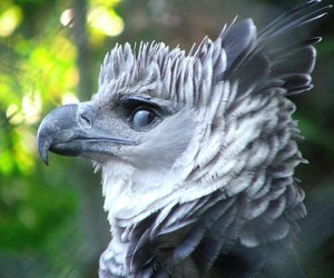 bird and harpy eagle image