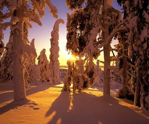 winter, finland, and snow image