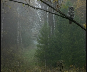 forest and owl image