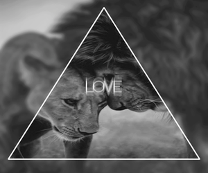 love, lion, and animal image