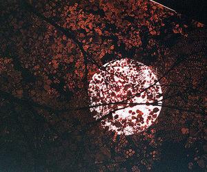 autumn, beautiful, and fullmoon image