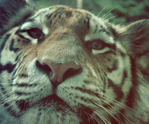 animal, cute, and beauty image