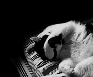 black and white, sleep, and cute image